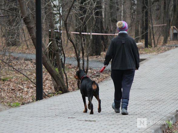 Уникальная площадка и тропинки для собак появились в нижегородском парке «Дубки» - фото 13