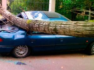 Упавшие деревья травмировали двух водителей в Нижегородской области