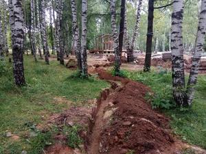 ОНФ обратился в прокуратуру из-за деревьев, поврежденных во время благоустройства в Нижнем Новгороде