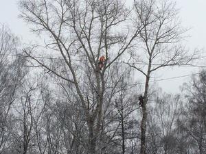 На нижегородских кладбищах вырубят около 200 аварийных деревьев