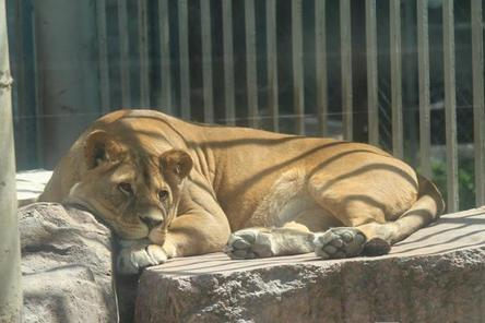 Сотрудников нижегородского зоопарка «Мишутка» сократят в начале марта