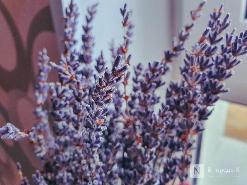 Семь сухоцветов, которые заменят привередливый цветок в горшке