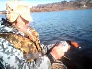 Красноголового нырка спасли от браконьеров в Нижегородской области