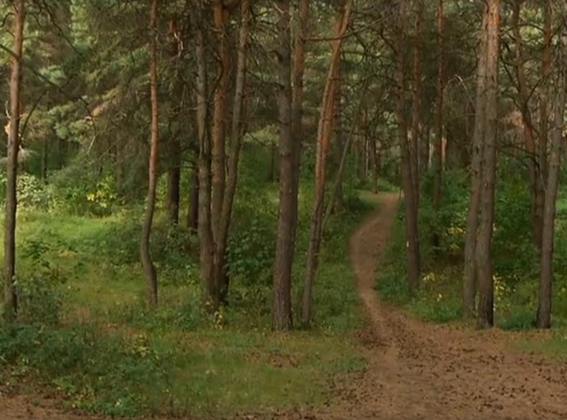 Тело мужчины с табуреткой и предсмертной запиской обнаружили на дереве в Сормовском парке - фото 1