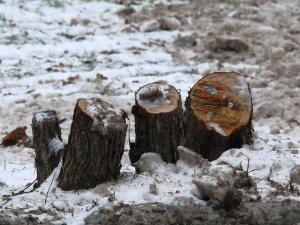 Более 400 деревьев незаконно срубили в Шарангском районе