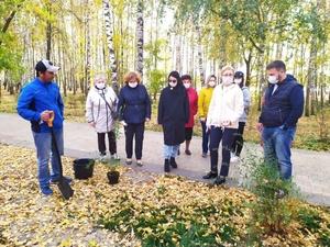 Около 60 деревьев заменили в Светлоярском парке