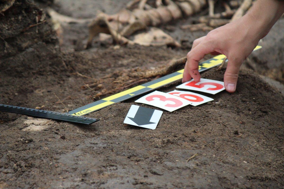 Новые находки на старом кладбище: что обнаружили археологи в Нижегородском кремле - фото 3