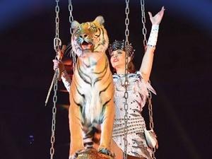 Тигр на шаре и романтика под дождем: новое шоу в Нижегородском цирке