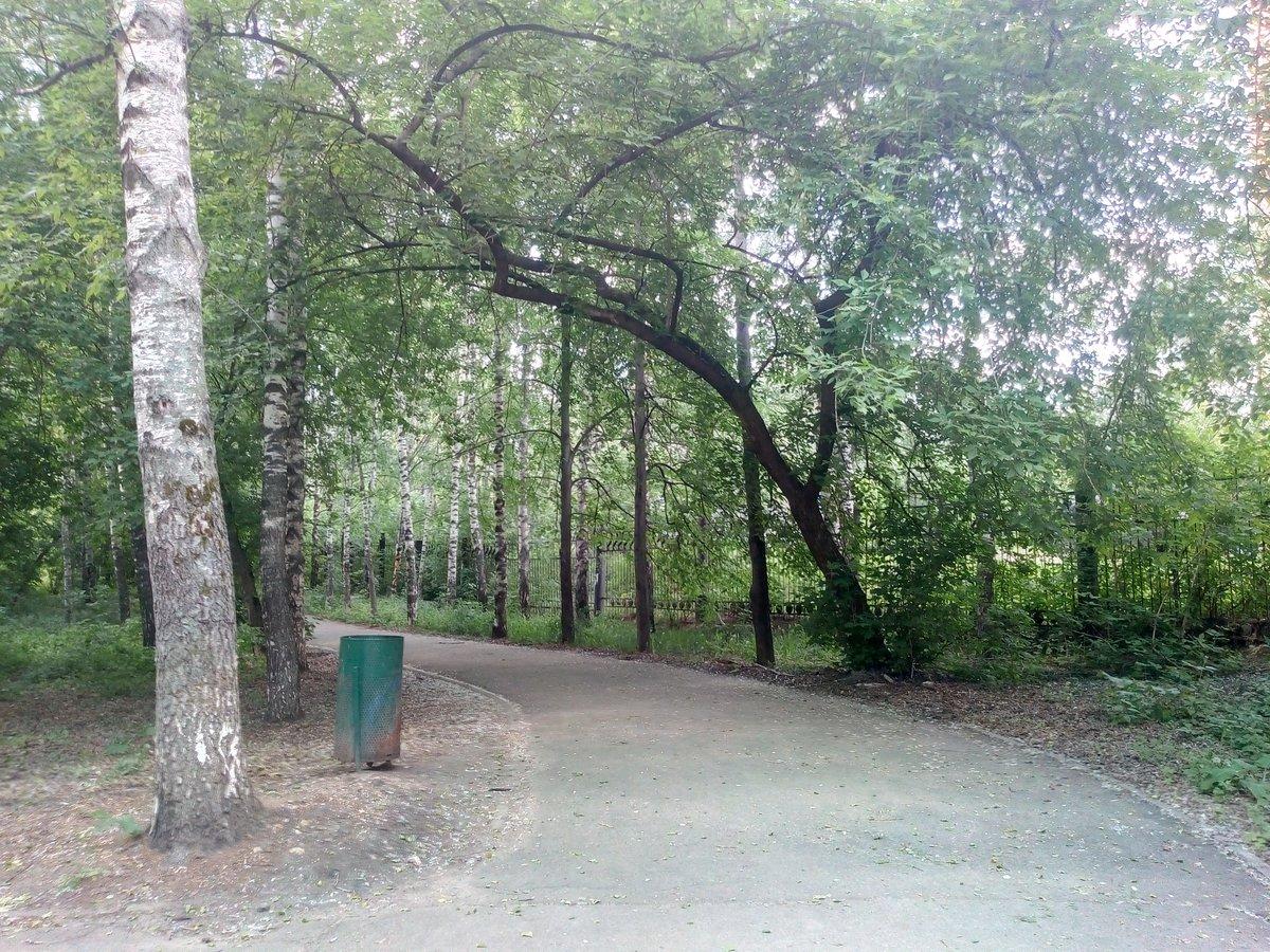 В Светлоярском парке высадят четыре тысячи деревьев и кустарников - фото 1