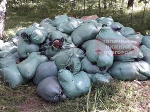 Ветслужба приступила к ликвидации найденных на Южном обходе биологических отходов