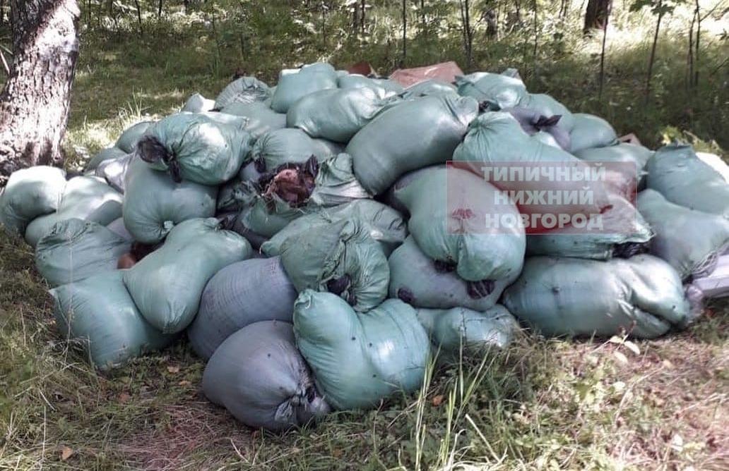 Ветслужба приступила к ликвидации найденных на Южном обходе биологических отходов - фото 1