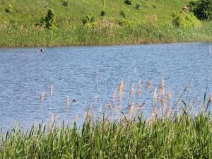 Тело 14-летнего подростка нашли в озере в Дзержинске