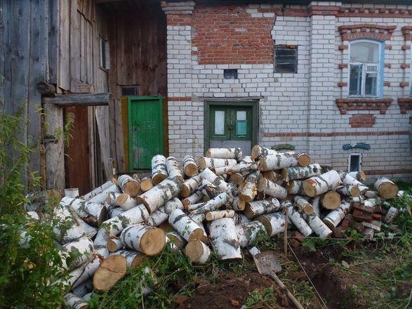 Житель Лысковского района незаконно нарубил берез на 150 тысяч рублей - фото 1