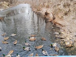 Пять километров реки Борзовка в Ленинском районе очистят от мусора