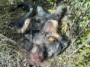Нижегородские следователи подозревают мужчину в убийстве и сожжении тела