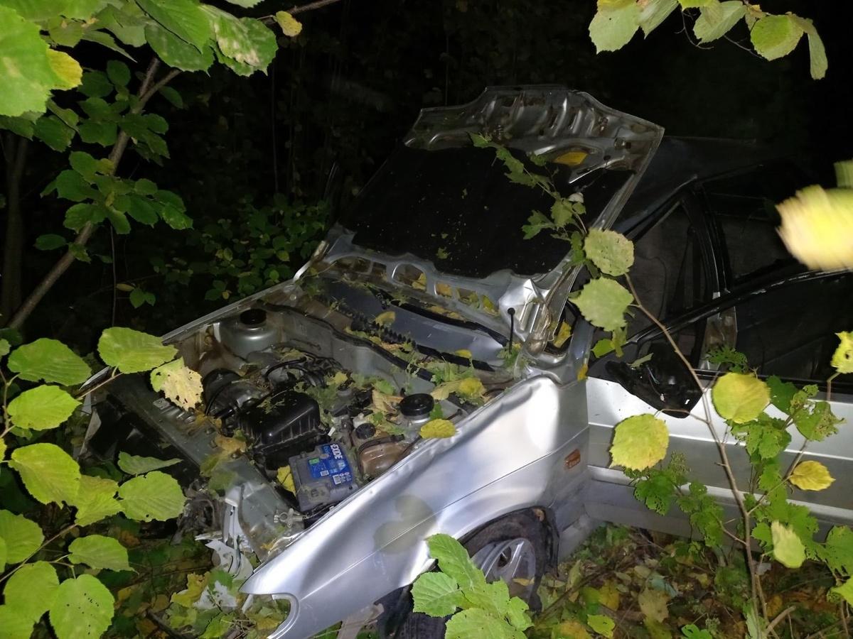 18-летний водитель погиб при столкновении с лосем в Перевозском районе - фото 1