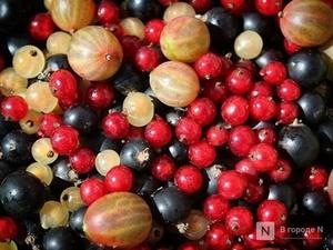 Почти в полтора раза увеличилось производство продуктов из ягод в Нижегородской области