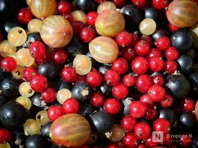 Почти в полтора раза увеличилось производство продуктов из ягод в Нижегородской области - фото 1