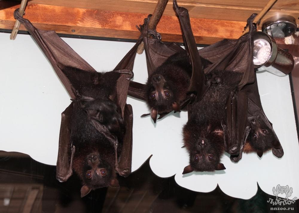 Два летучих мышонка родились в нижегородском зоопарке в канун Хэллоуина  - фото 1