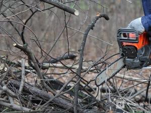 Браконьер напилил деревьев на 300 тысяч рублей в Тонкинском районе